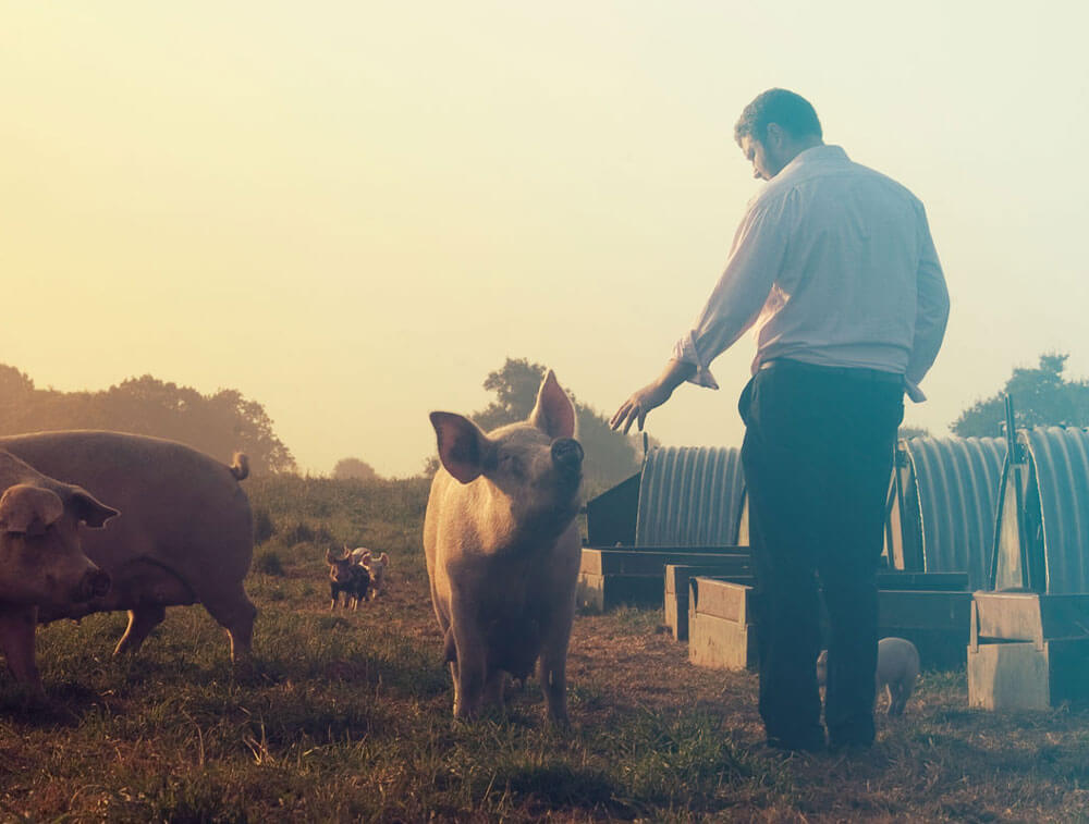 Packington Pork named as Top 1000 Companies to Inspire Britain